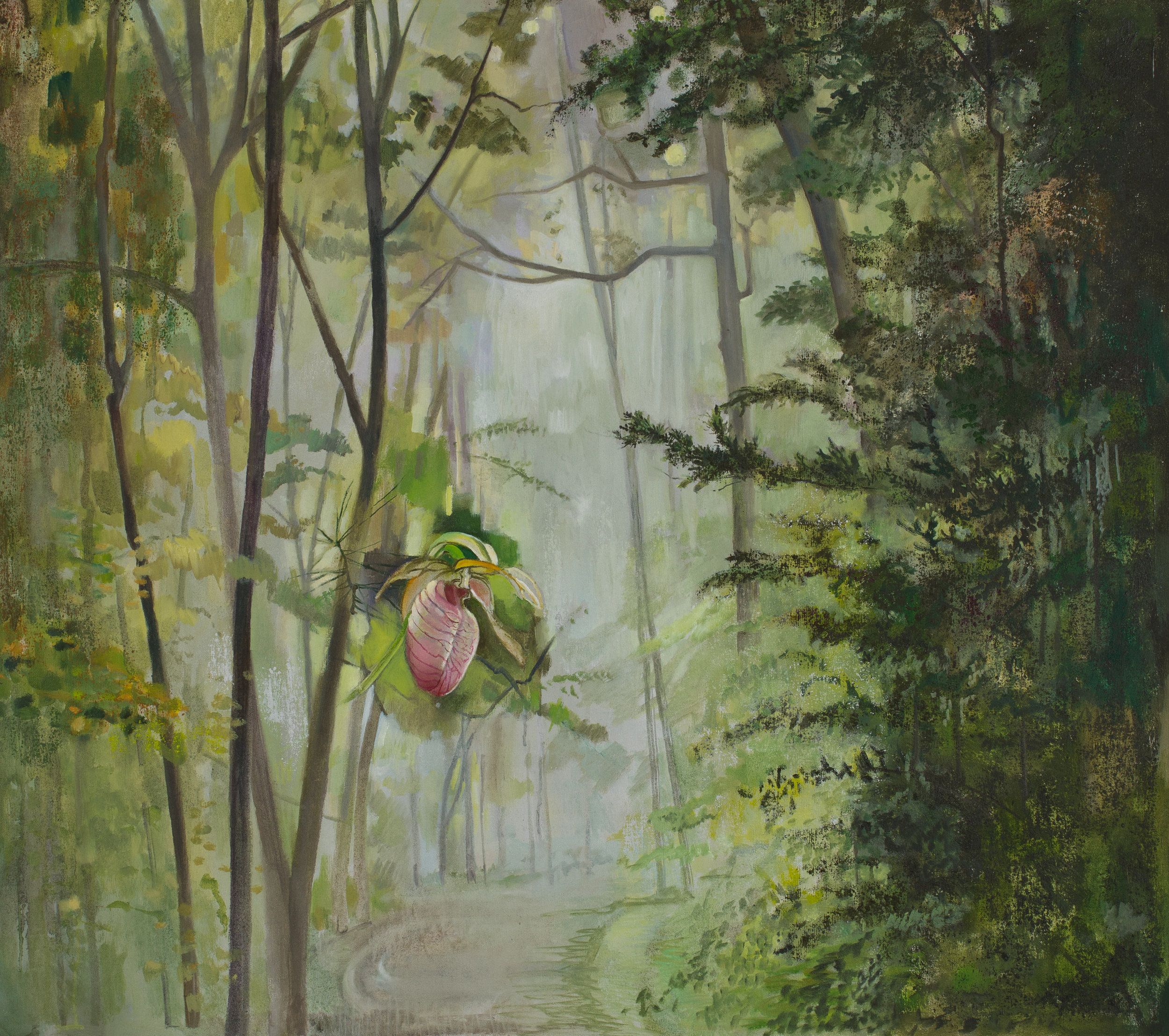 Lady Slipper, Forest Fog