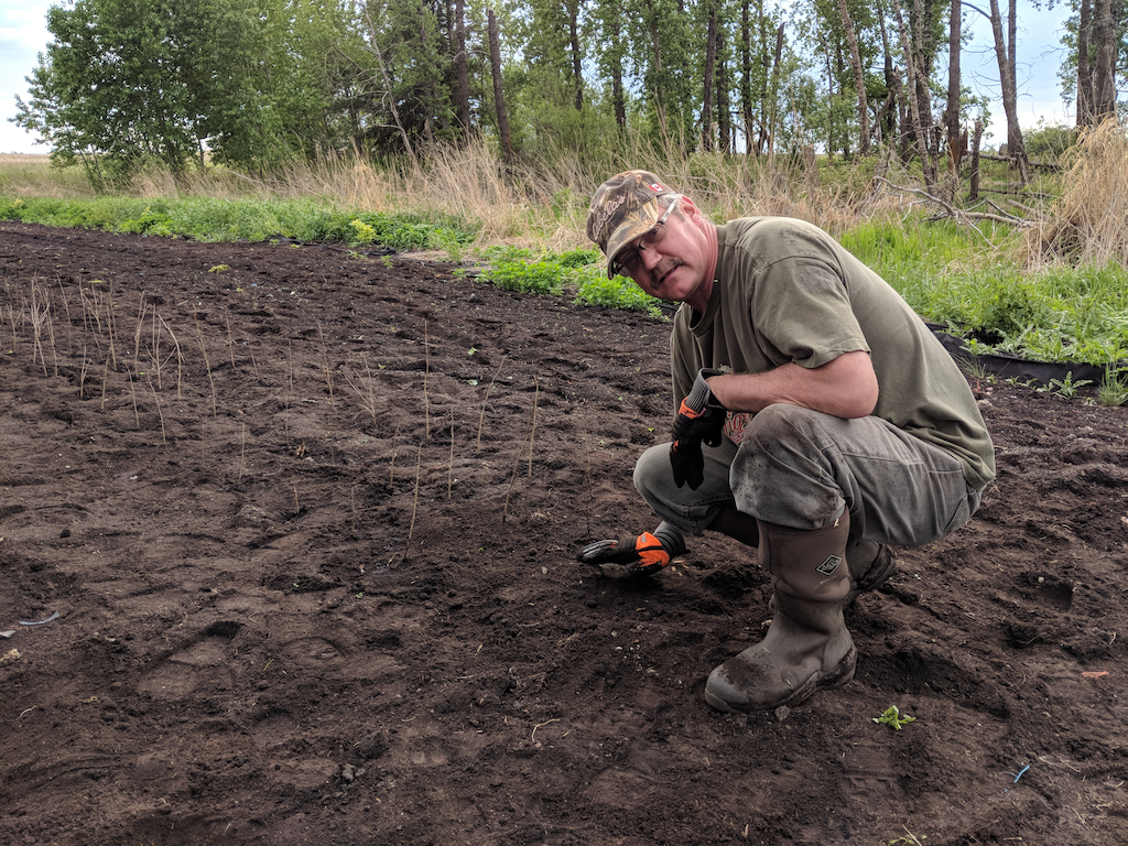 - Collin planted the 1000th Cherry tree in the nursery