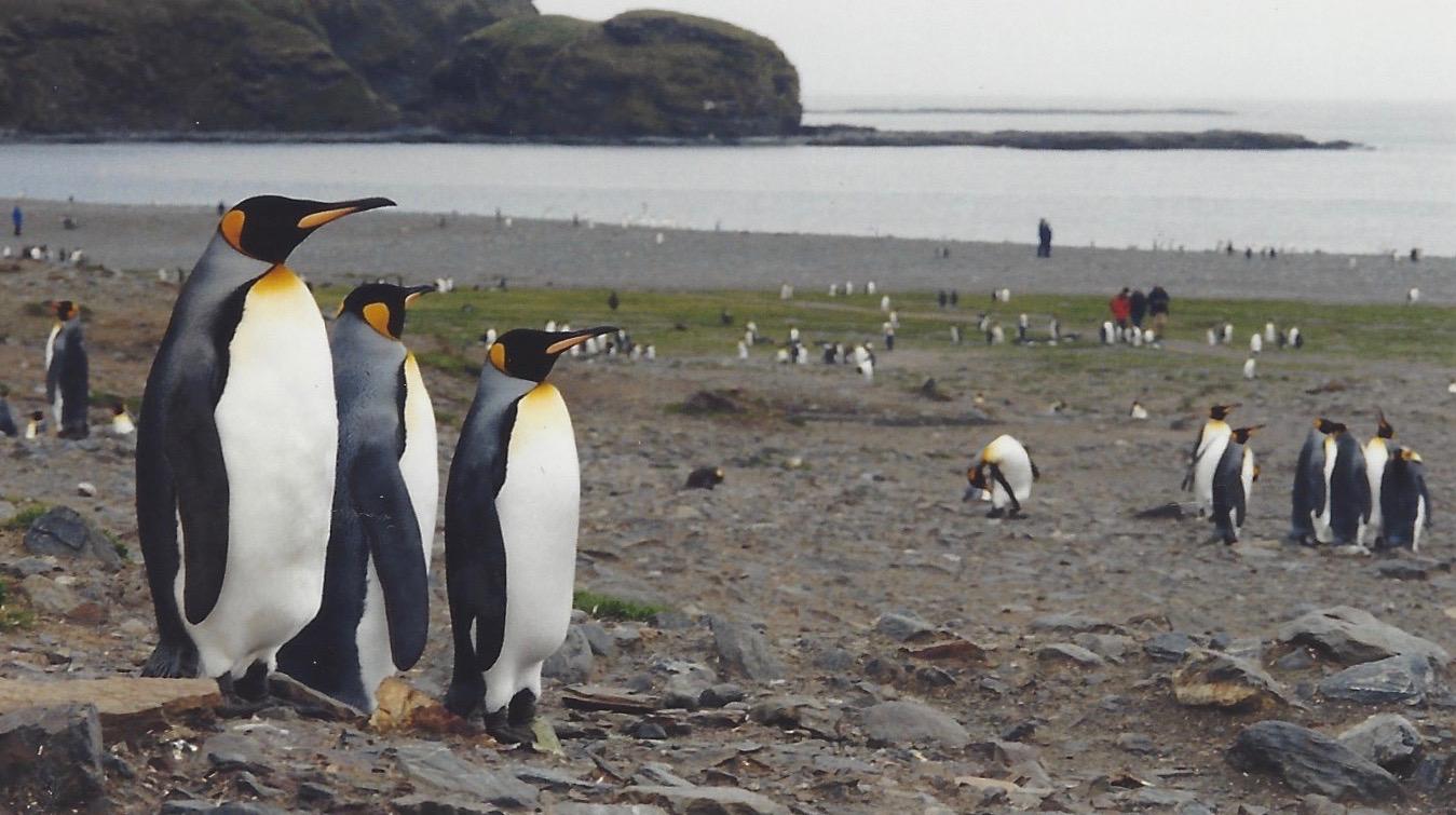 17. I Remember the Penguins.jpeg