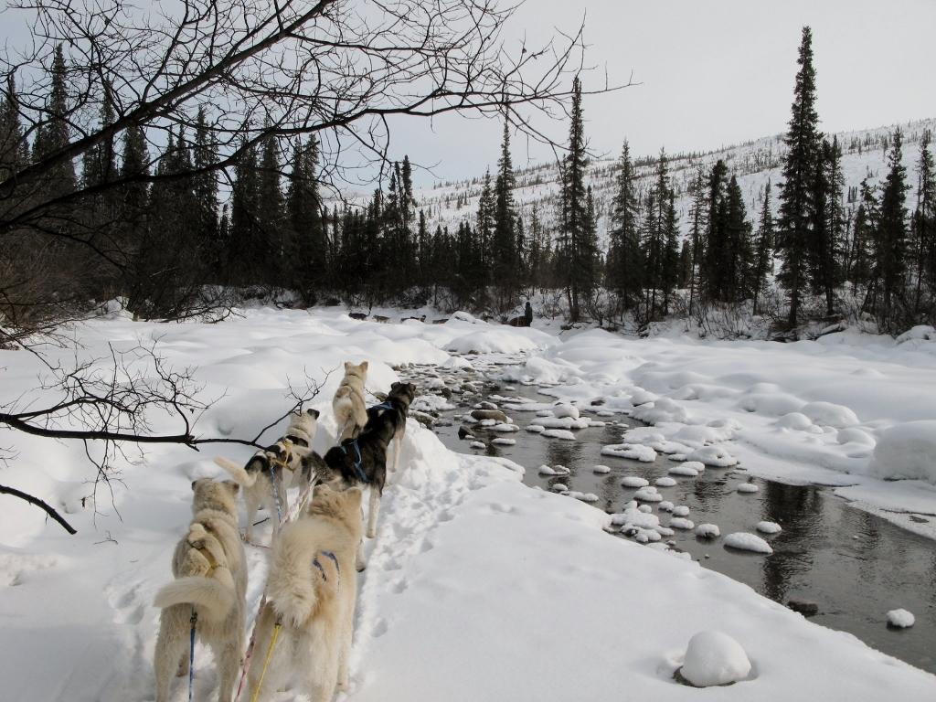 Dog sledding wilderness adventure