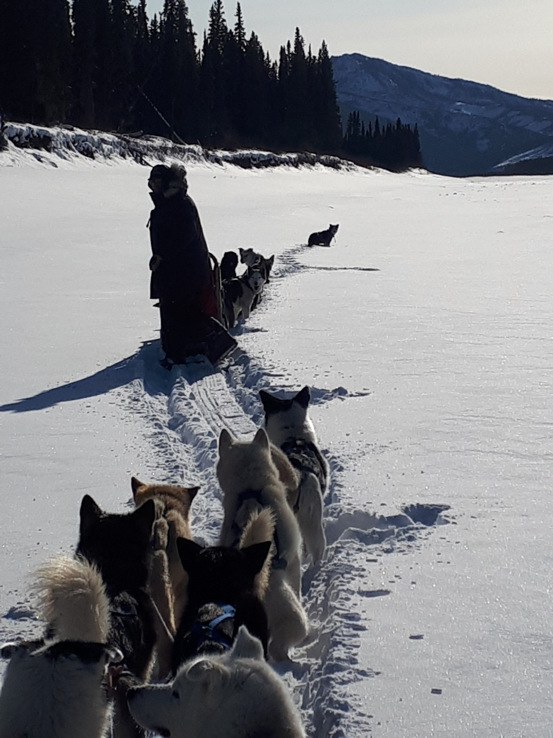 Dog sled Eagle, Alaska, Yukon