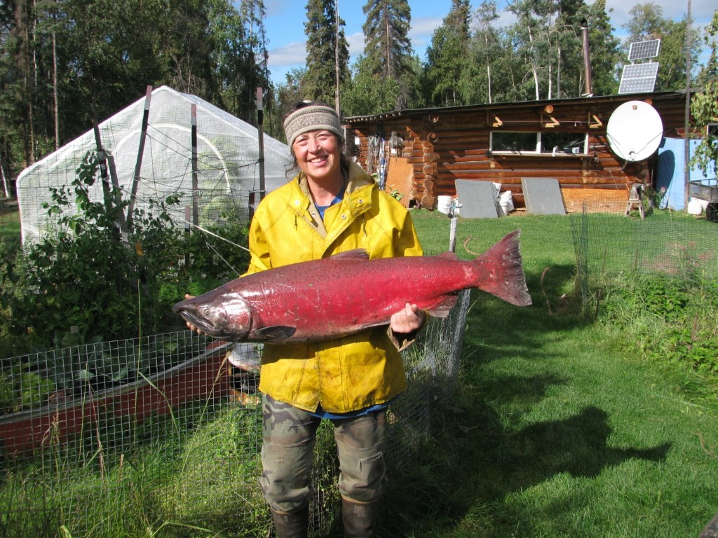 King, Chinook Salmon Yukon River, Eagle, Alaska
