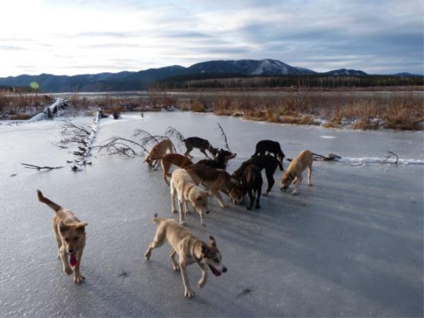 Sled Dogs Eagle, Alaska, Yukon River