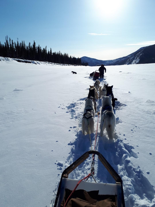 Dog Sledge trip wilderness adventure Alaska, Yukon River