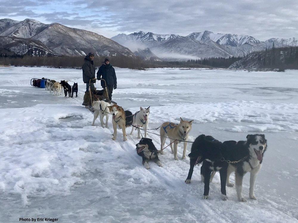 Dog-sled-alaska-yukon.jpg