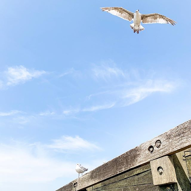 Happy Sunday 😘  #beach #surreyartist #seagull #whitstable #throwbacktothesummer #pretendingitsnotraining
