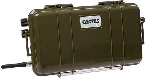 cactus-c1.jpg