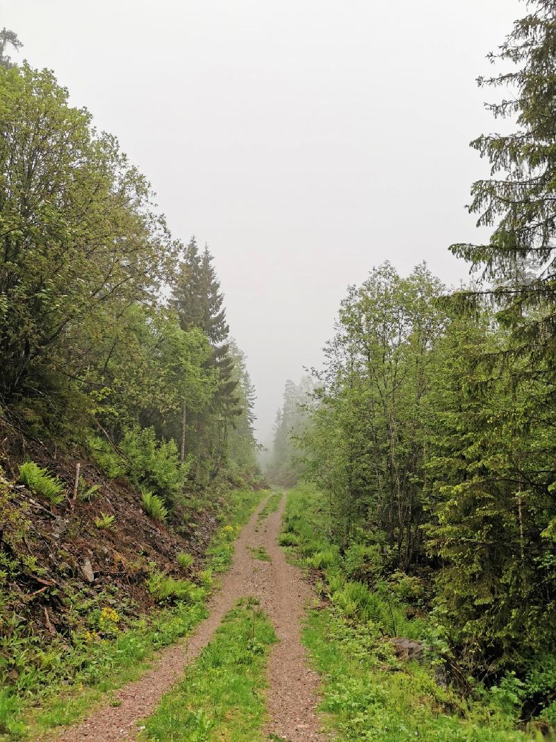 Ingenting slår skogen her jeg bor. Dette er tre meter utenfor huset mitt!