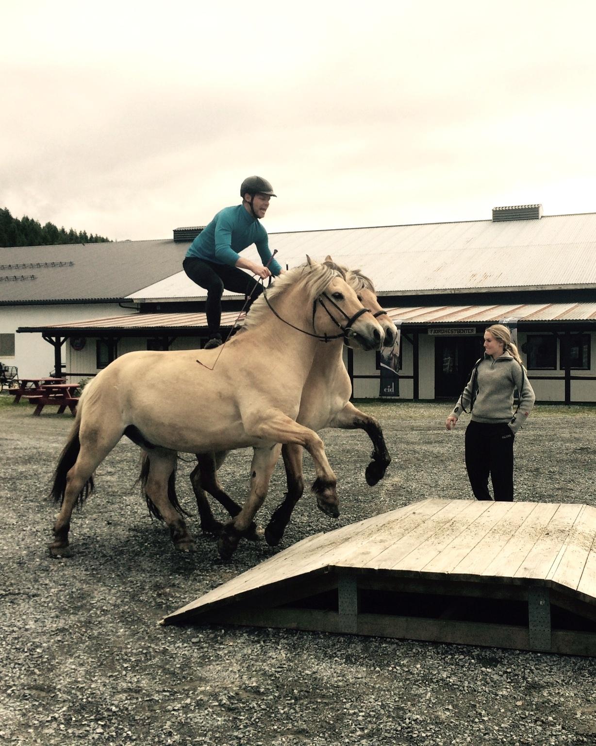 - Driftsleiar og lærar hest.Tilsett sidan 2017Utdanning/erfaring:Yrkessjåfør i 13 år, har dreve med hest sidan 1985. Kusk, rytter, allsidig hestemann.Hobbyar/interesser:Gå i fjellet, koselege heimekveldar saman med familien.