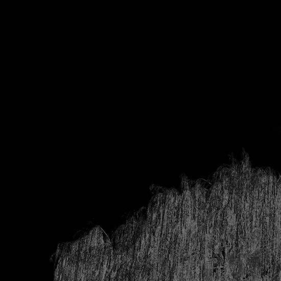 REV<<_Salix.jpg