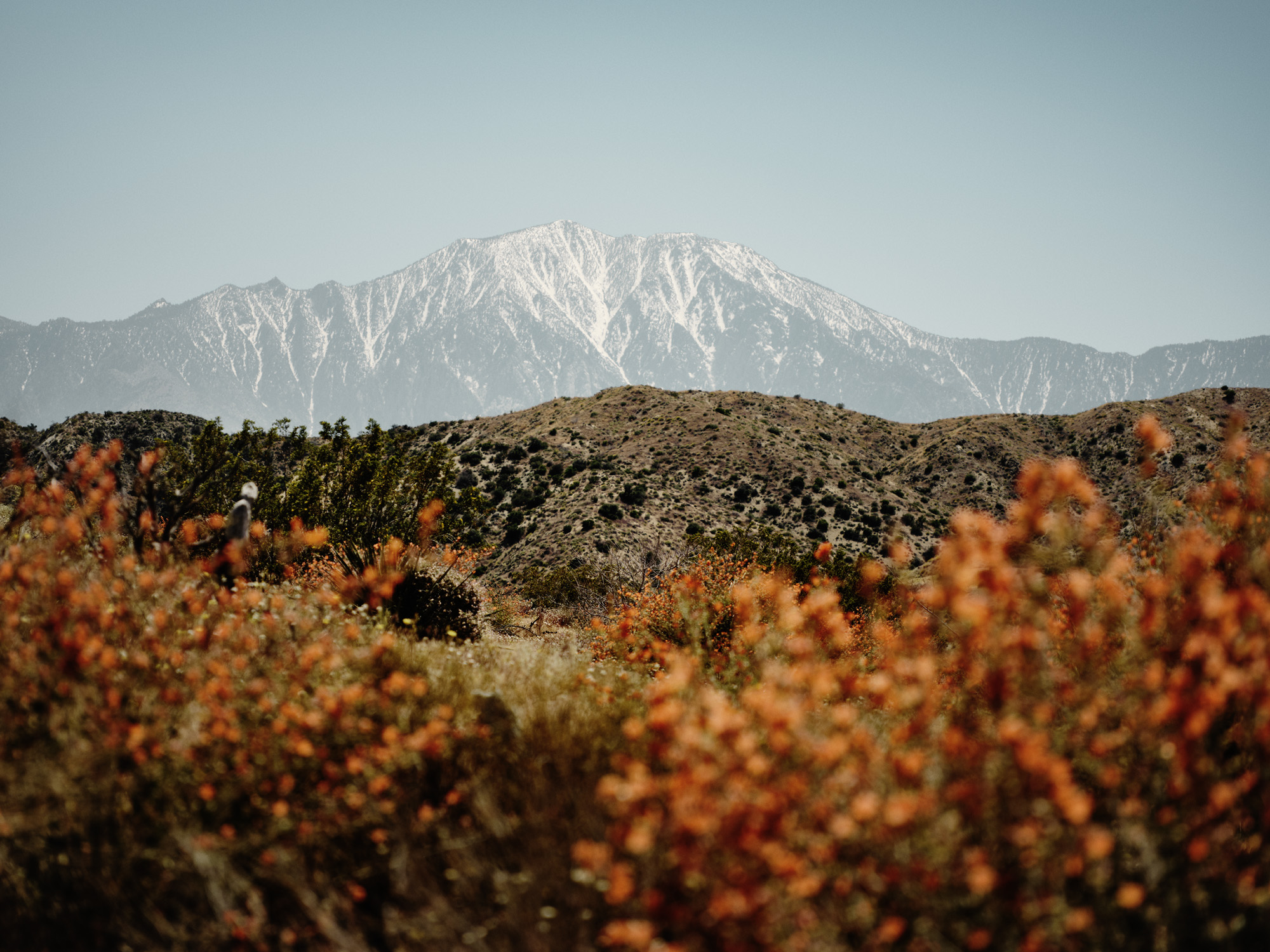 Morongo Valley, Greater Palm Springs. You start to find yourself looking for new angles and new ways you can see things, and becoming appreciative for a super bloom, creating images you didn't really envisage happening where you were.