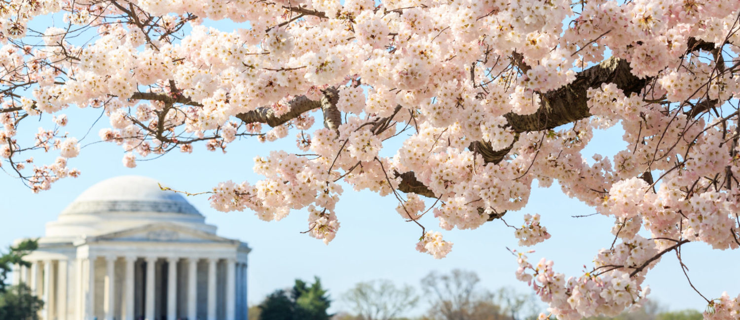 Blossoms-and-the-Jefferson-Memorial-©-Shutterstock-Pigprox-1500x650.jpg