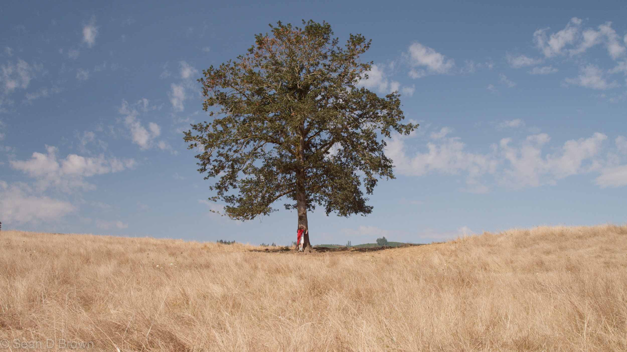 """""""The best time to plant a tree was 20 years ago. the second best time is now"""" - - Ancient Chinese Proverb"""