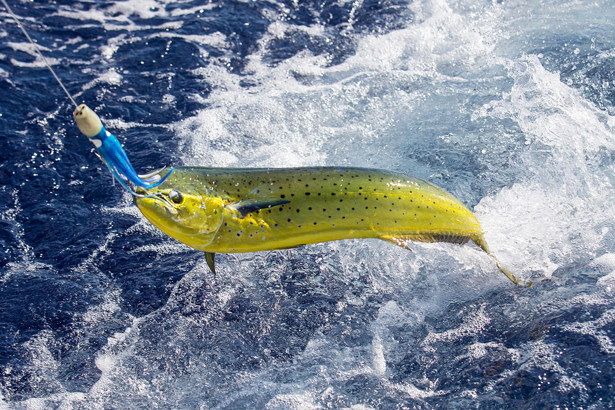 Quit Wishin, Let's Go Fishin!