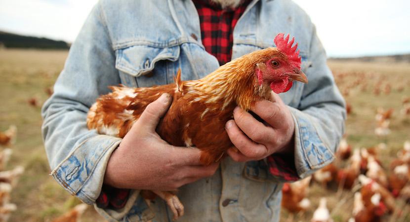 EU_chicken_farmers.jpg