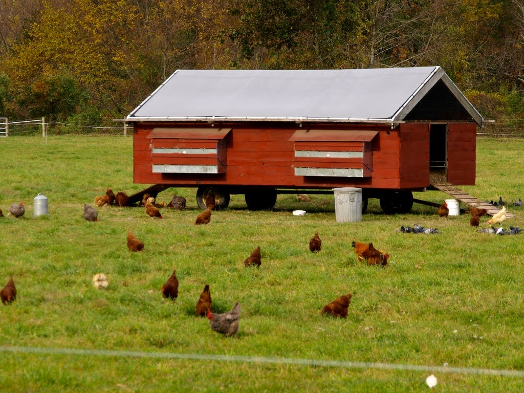 Mobile-Chicken-Coop-Large.jpg