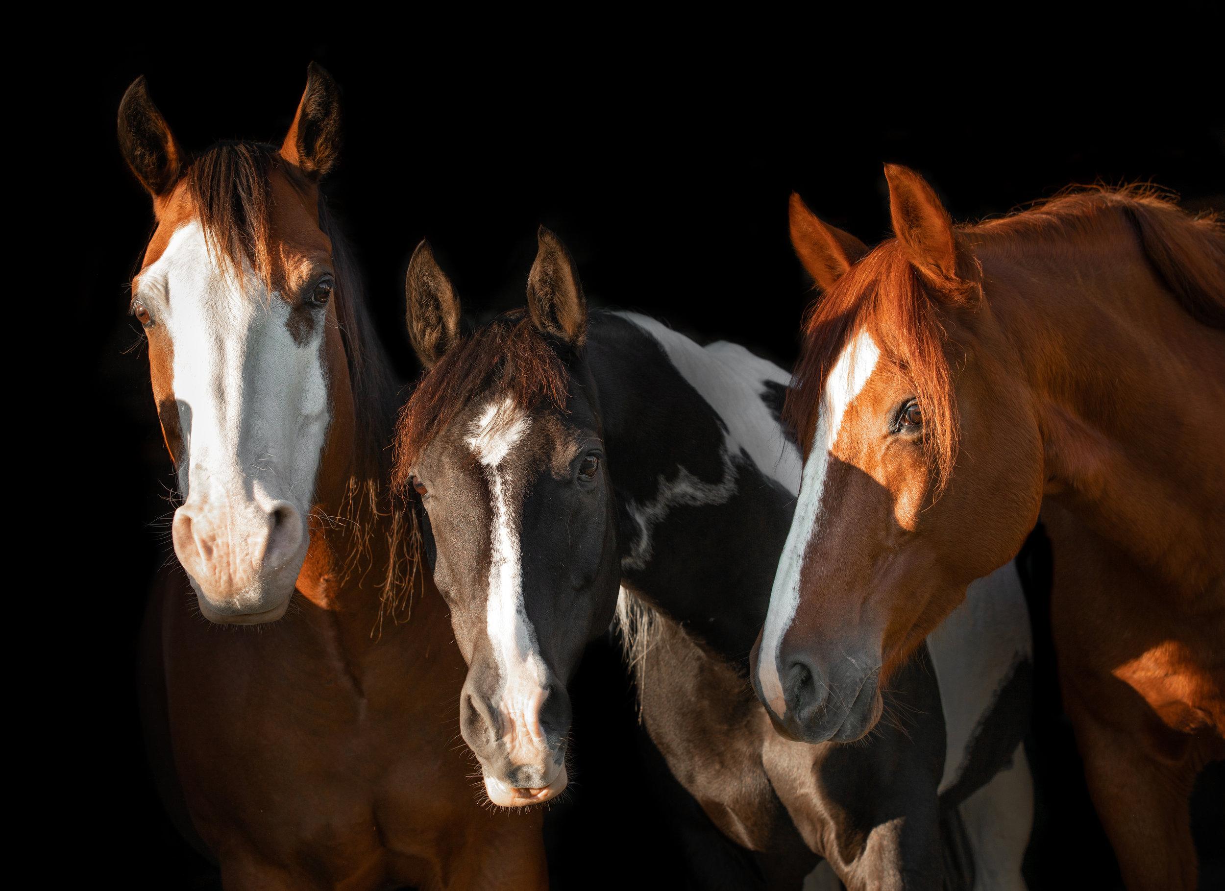 Horses-43.JPG
