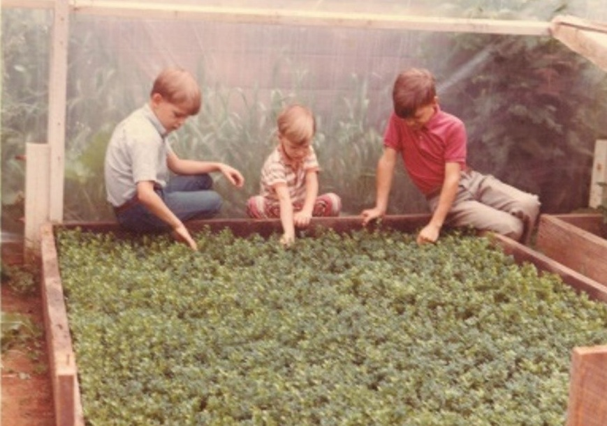 A young Robert, John, and Bennett Saunders checking the boxwood cuttings.