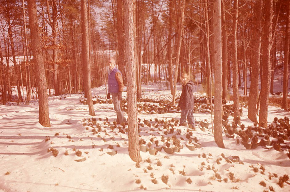 John and Sam Saunders walking through the nursery in the snow.