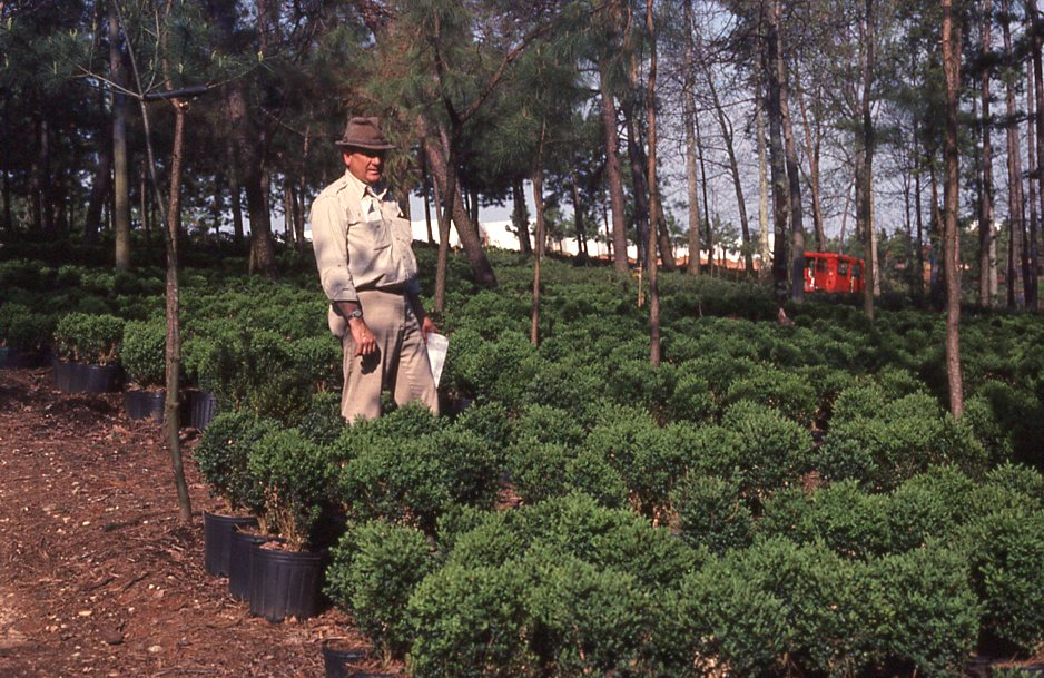 Paul walking through a crop of boxwood.