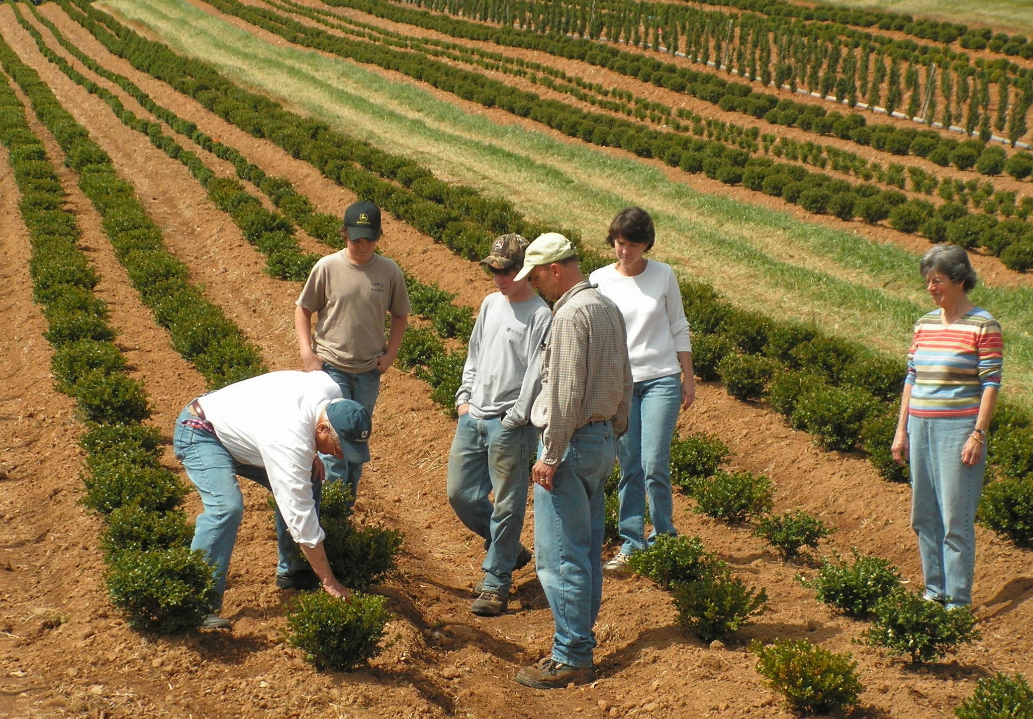 Three generations in the field learning about boxwood. Paul and his grandsons, Tye and Marshall, are joined by their father Bennett, his wife Lynn and Paul's wife Tatum.