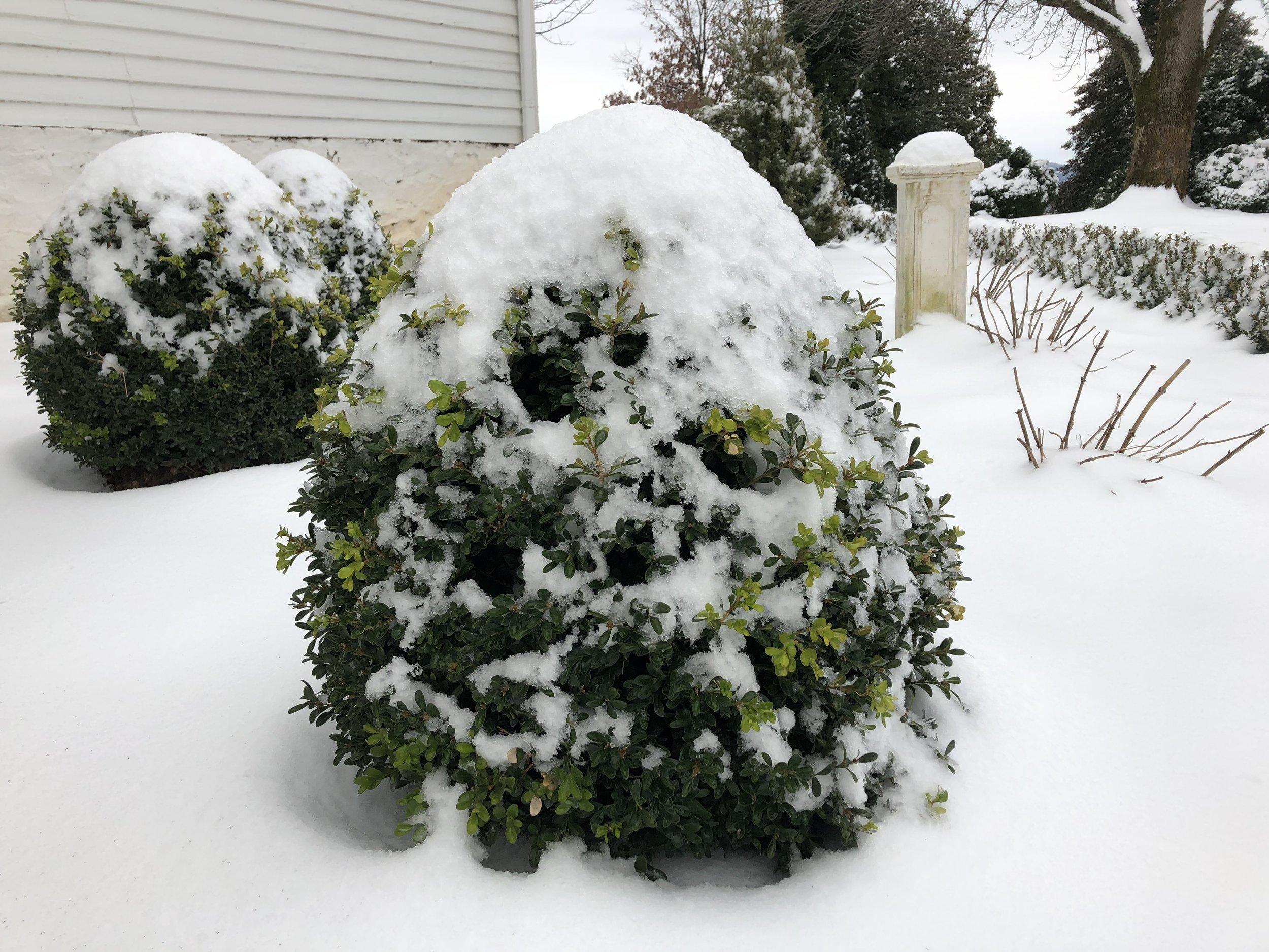 NewGen Independence in Snow.jpg
