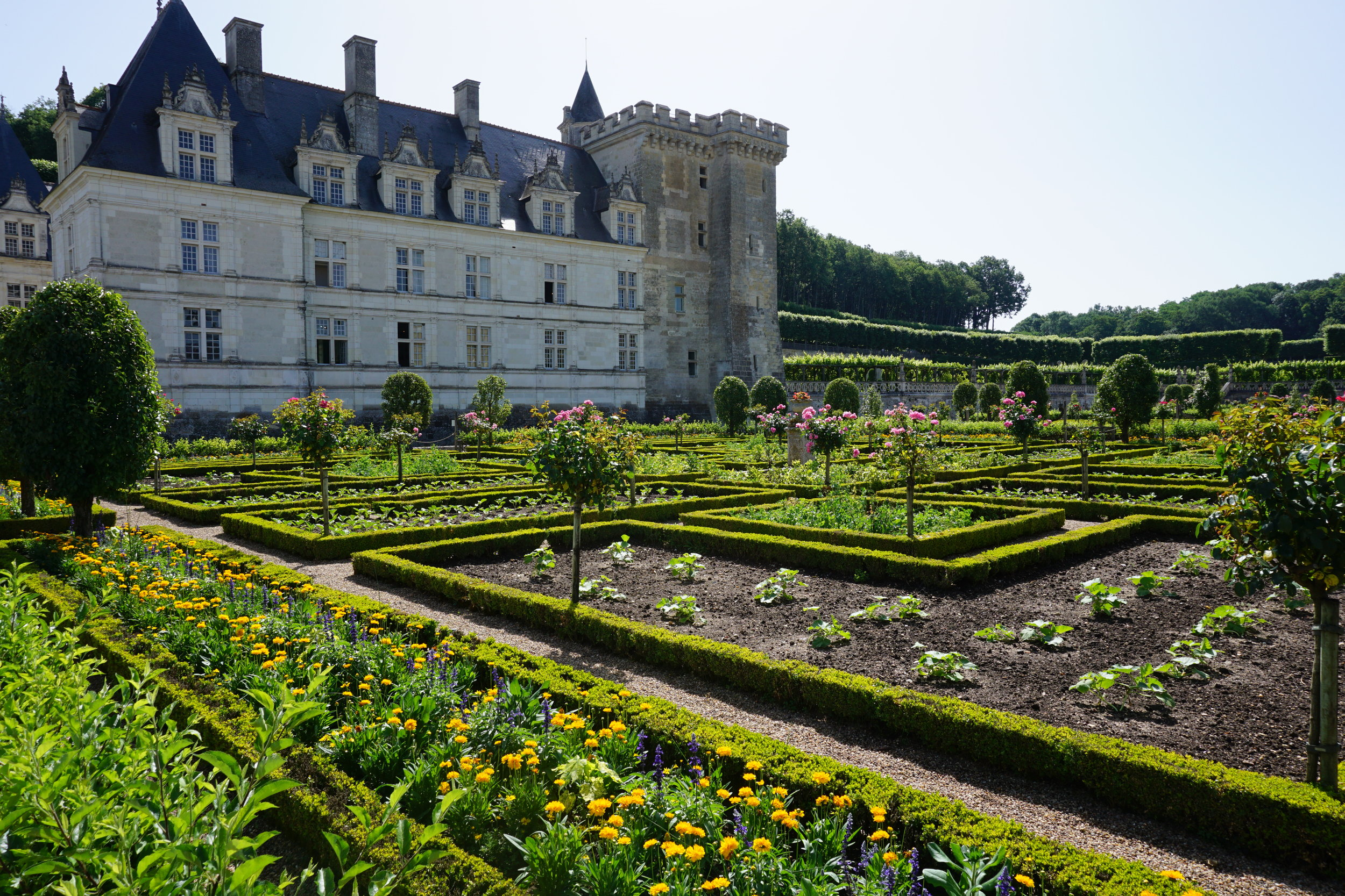 A stunning display of boxwood hedges at the Chateau de Villandry in France.