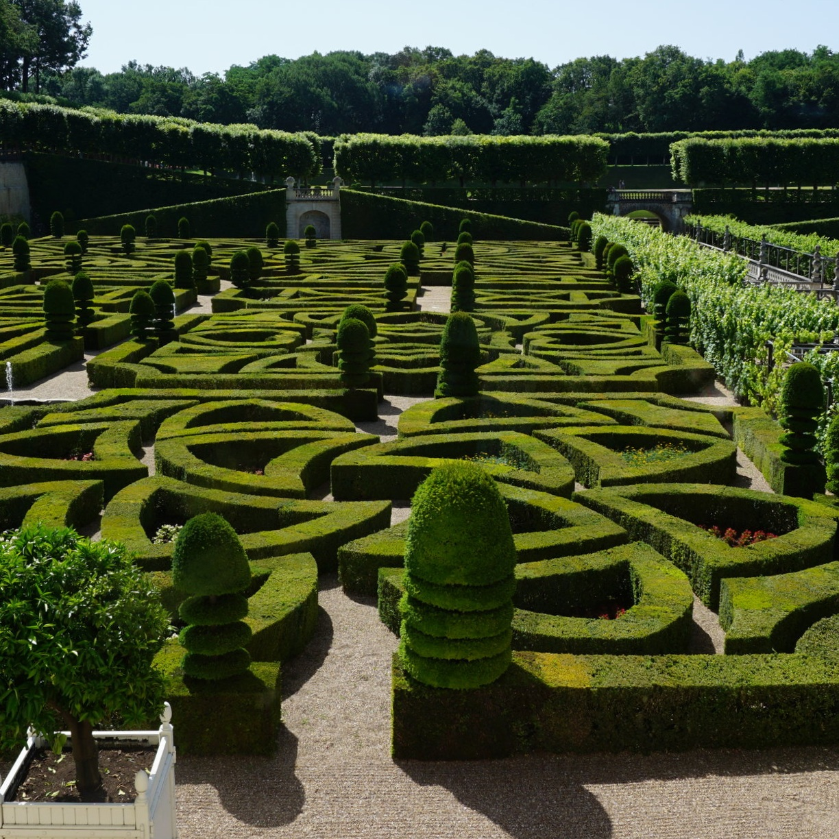 An impressive boxwood maze in a formal garden in France.