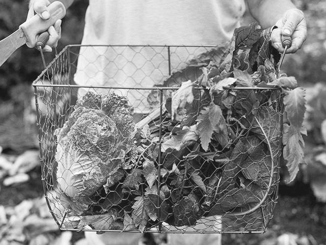montana-gardening+copy.jpg