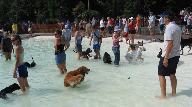 Doggy Paddle Aquatic Center For Dogs 1.jpg