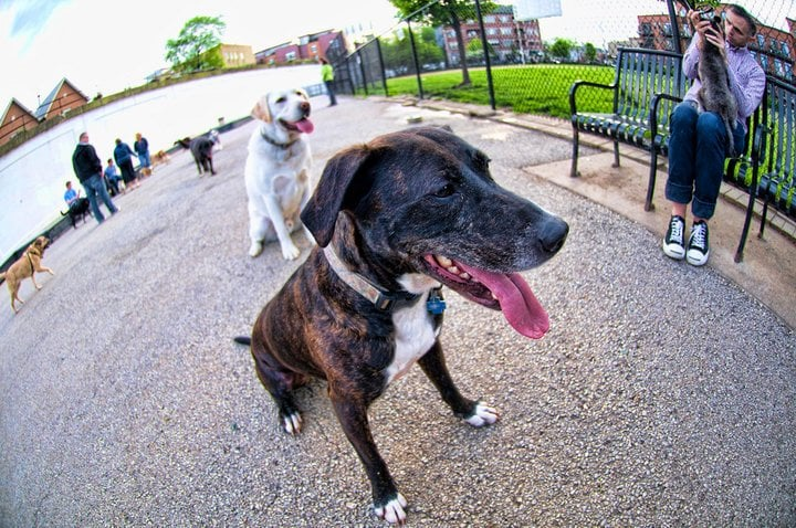Churchill Field Dog Park 2.jpg