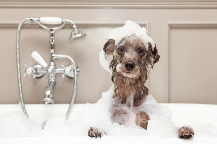 pets - wash your dog.jpg