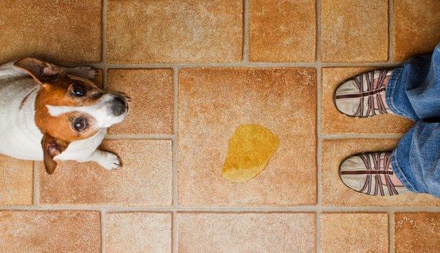 small dog pee kitchen tile floor