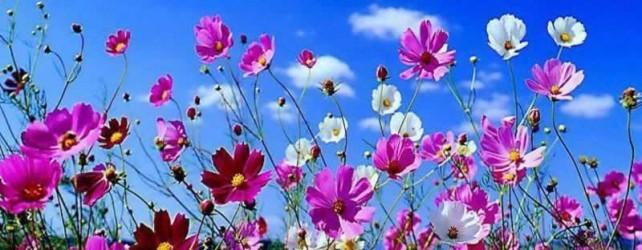 wildflower banner.jpg