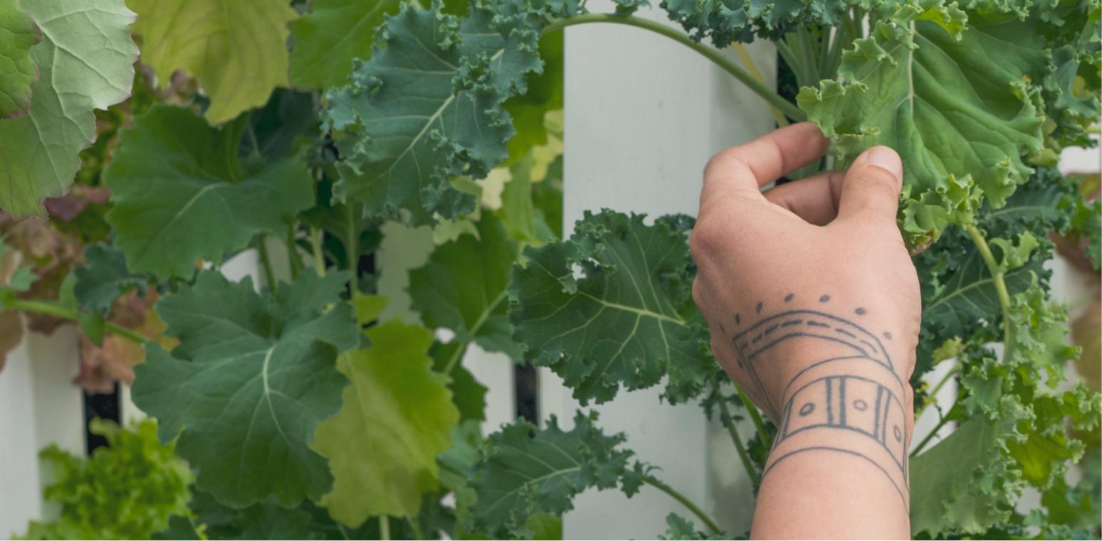 Green Iglu_ Arctic Farming Education