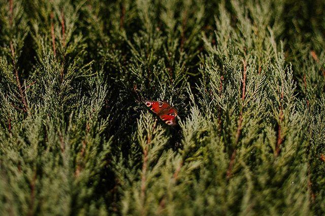 Nasz ogród jest wciąż zielony, magiczny i pełny życia. Motyle fruwają, jest zielono i pachnie grzybami z lasu ❤️ A my mamy wolne terminy na #jesien2019 u nas ❤️ - 18-23 września - 28-30 września - 1-17 października - 25-31 października Zapraszamy serdecznie do naszej leśnej bajki @przylesie12 🌲💚 #przylesie12 #noclegi #loftnapoddaszu #agroturystyka #wakacje2019 #ogrod #lubuskie #lubuskiewartezachodu #gorzowwielkopolski #jenin #bogdaniec #polskanaweekend #explorepoland #zwiedzajpolske #motyl #wogrodzie #magiczneogrody #weekenders #airbnbexperience