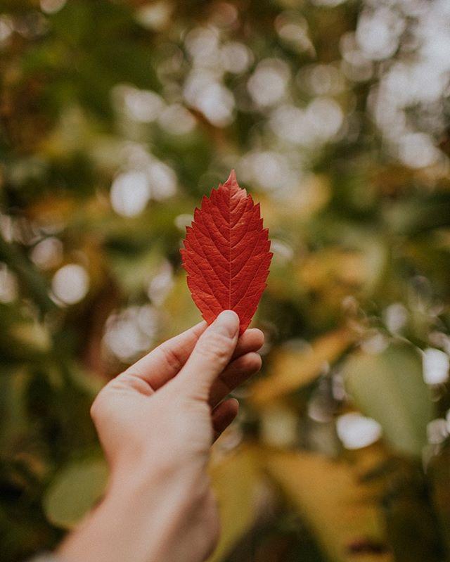 Jesień wkrada się do naszego ogrodu pięknymi kolorami 🍁 A u nas wciąż mamy wolne terminy na tą złotą porę: 🍄 8-18 października 🍄 28-31 października 🍄 1-15 listopad Zapraszamy na naszą stronę ❤️ Link w bio 🔥 #przylesie12 #loftnapoddaszu #domwlesie #lubuskie #noclegi #apartament #turystyka #natura #wakacje2019 #jesien2019 #jesien #gorzowwielkopolski #agroturystyka #dolasu #bliskonatury #laswogrodzie #wypoczynek #blizejnatury
