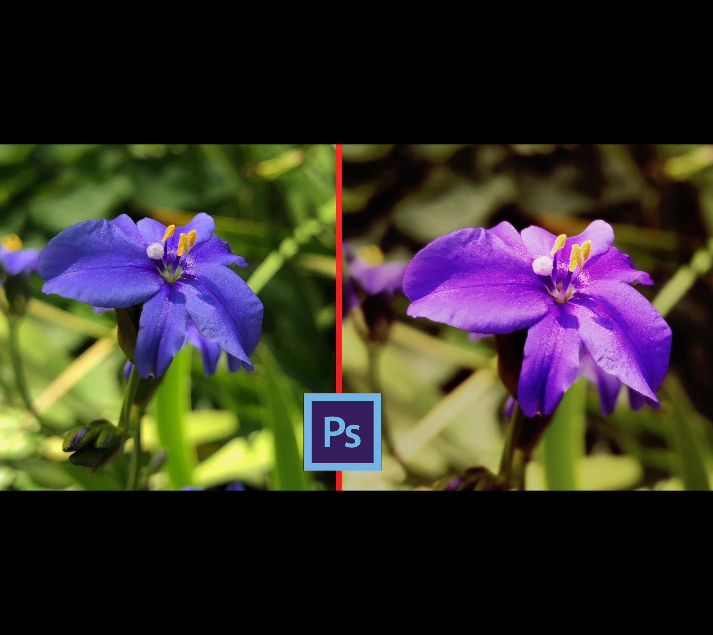 photoshop flower editing2.jpg