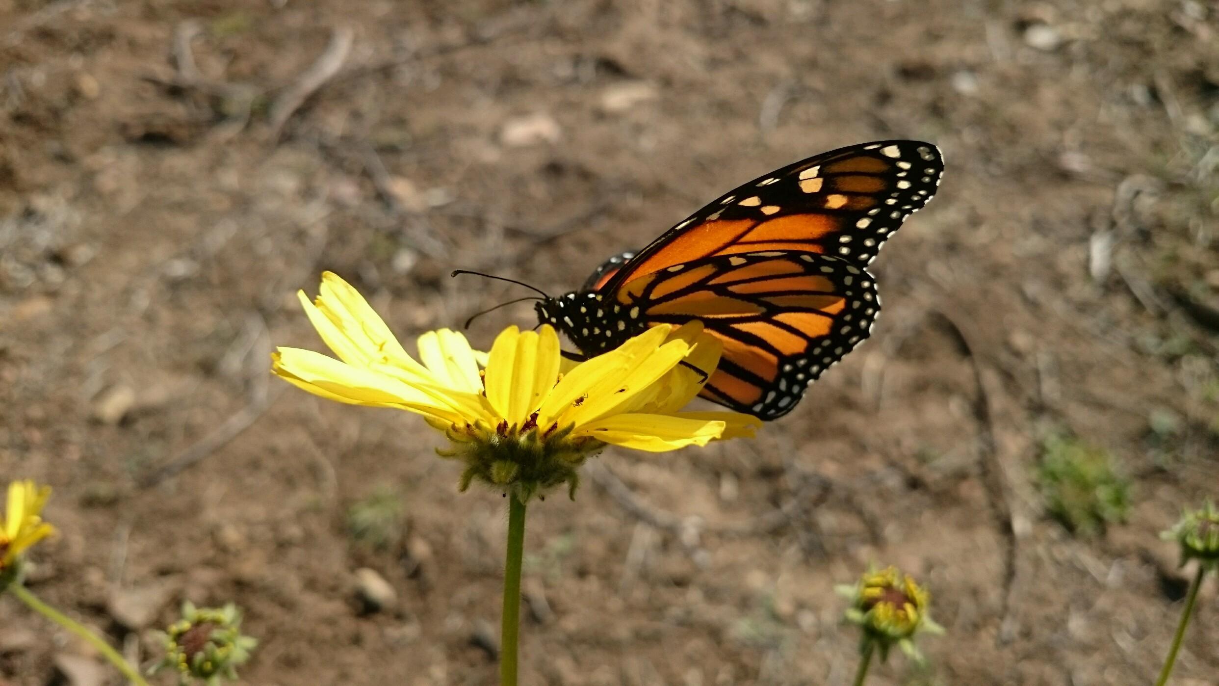 National Pollinator Week-5.jpg