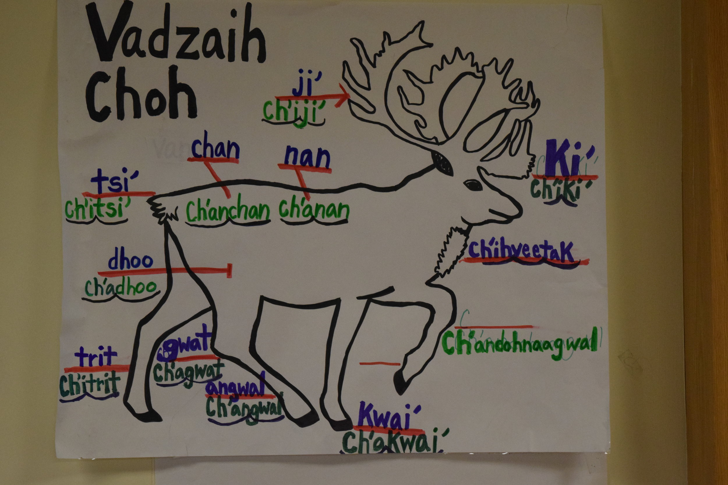 About - Find out about Yukon Flats Indigenous Language Revitalization Institute efforts,methods, and the work we are doing.