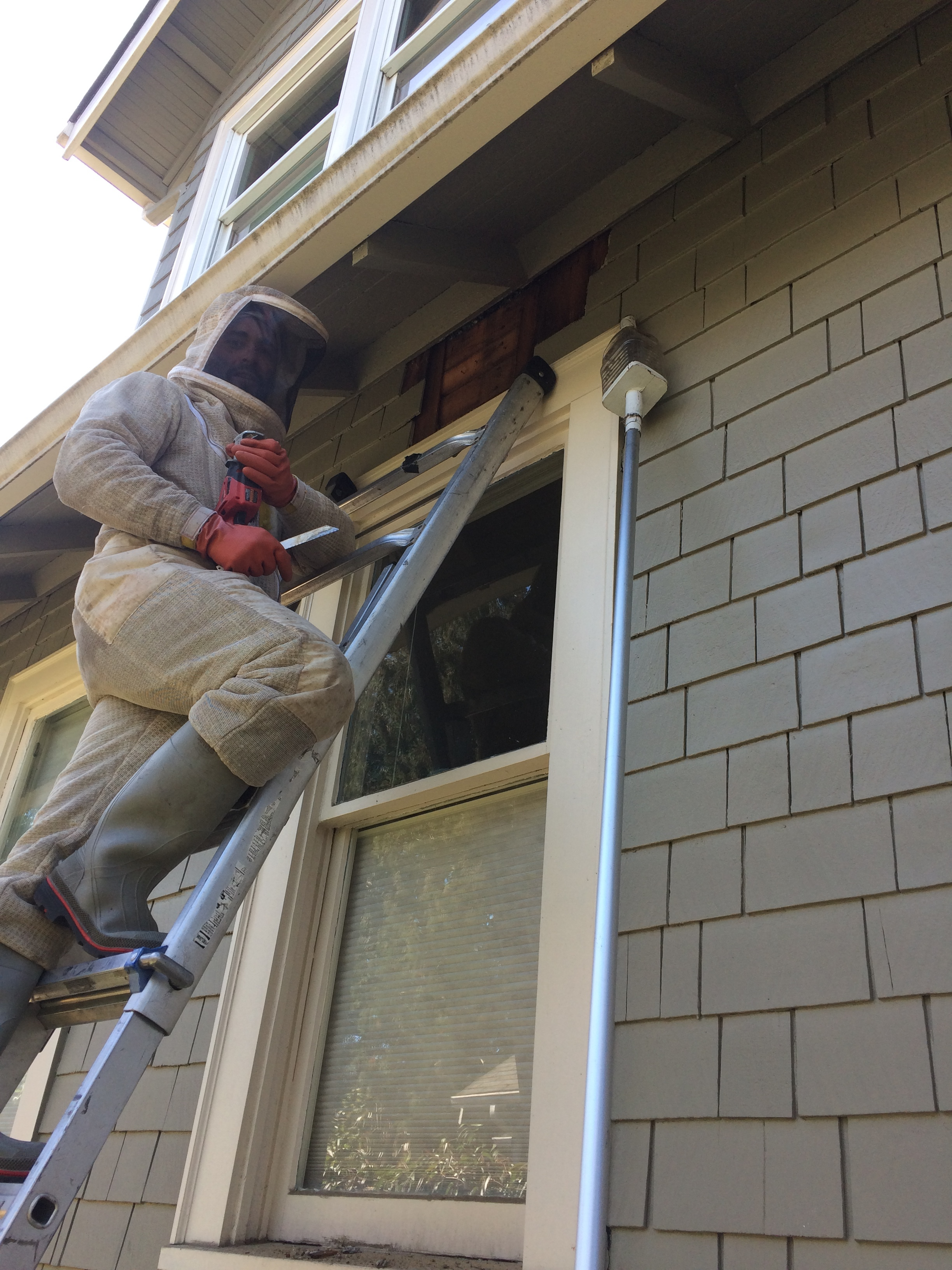 yellowjacket wasp removal window frame.JPG