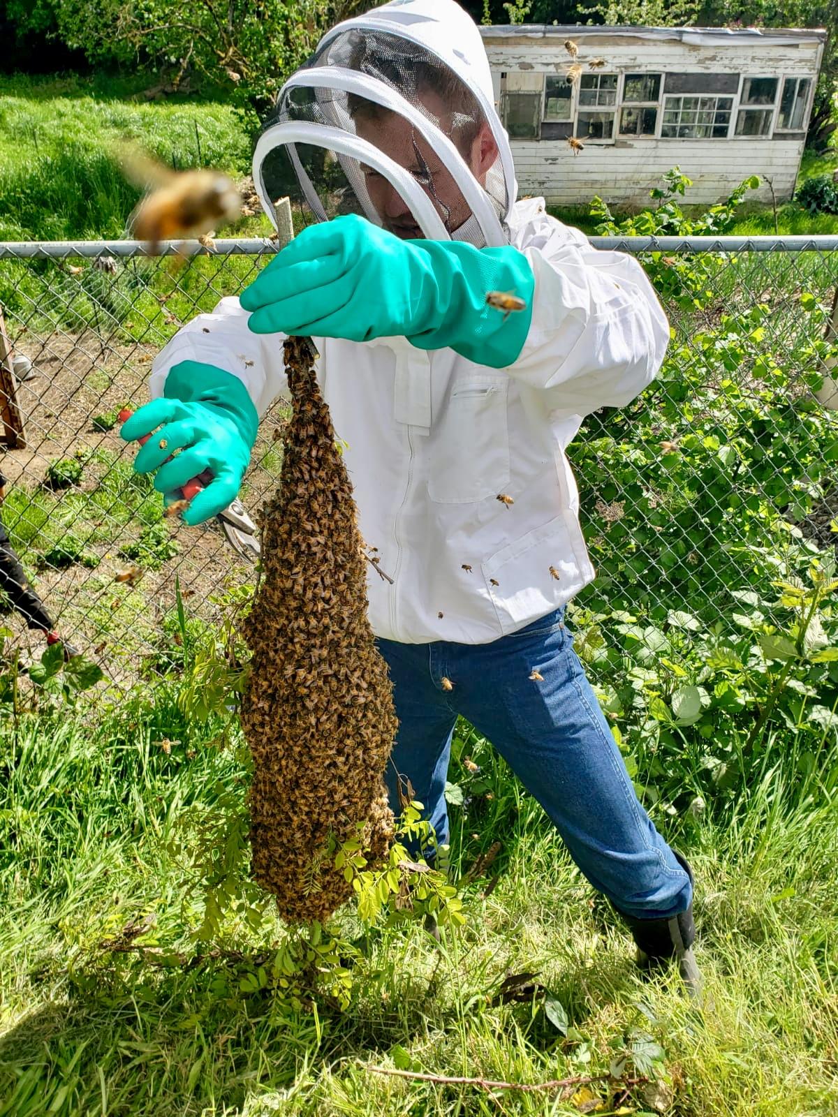 bee relocation.jpg
