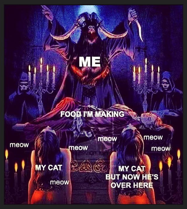 Hail the Cat!  #cats #catmemes #sataniccats #hailkitties #catgoat #occultcat #occult #occultmemes #witchcraft #occultism #hail