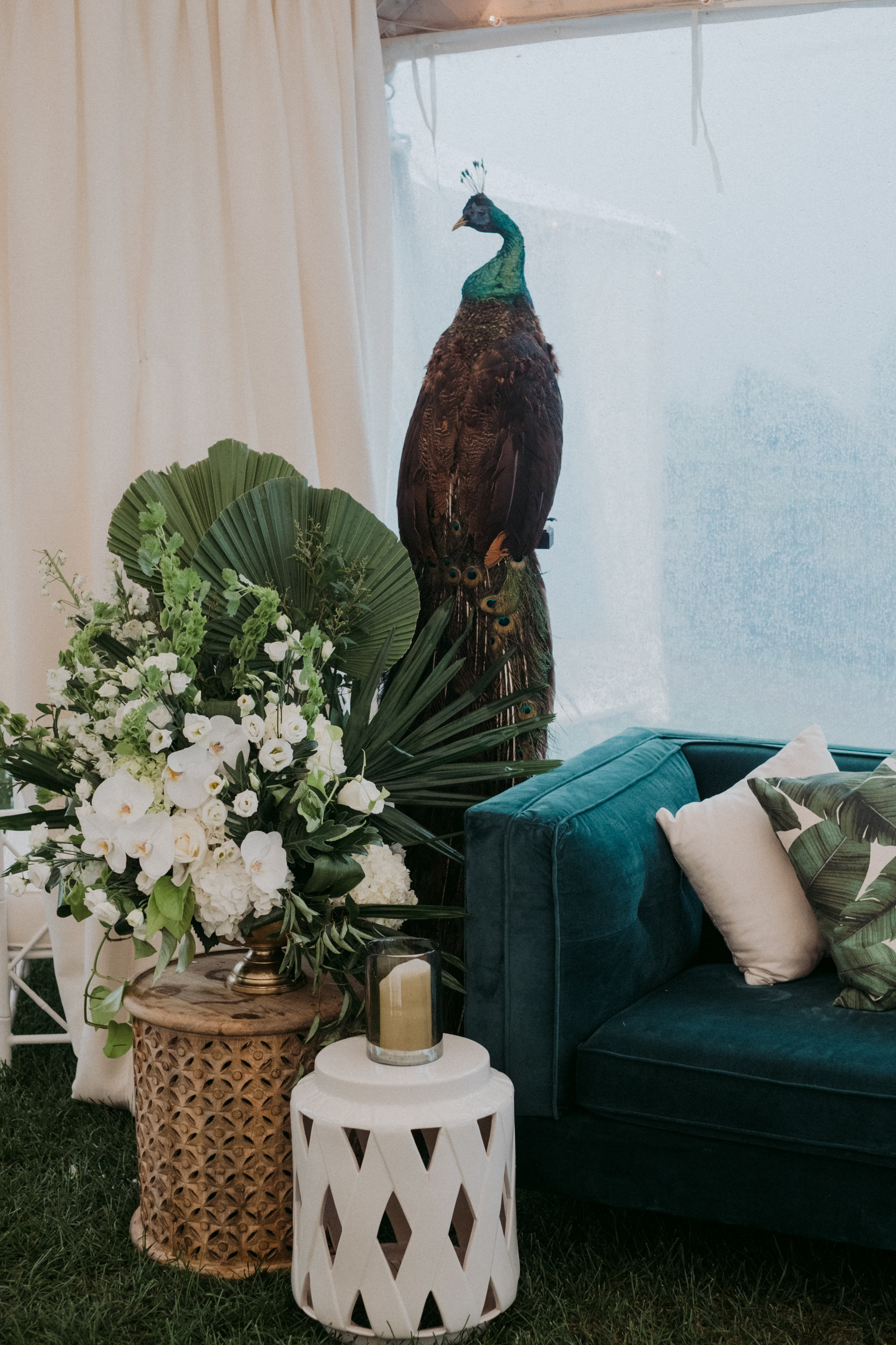 Same Sex Wedding in Provincetown, MA. Destination wedding planned by Nicole Simeral. Coastal Chic Wedding, Travel Wedding, Sperry Sailcloth Tent Wedding, bamboo folding chairs, Belfast linen, whites and greens , lounge seating, coffee table, velvet lounge, green velvet couch, peacock