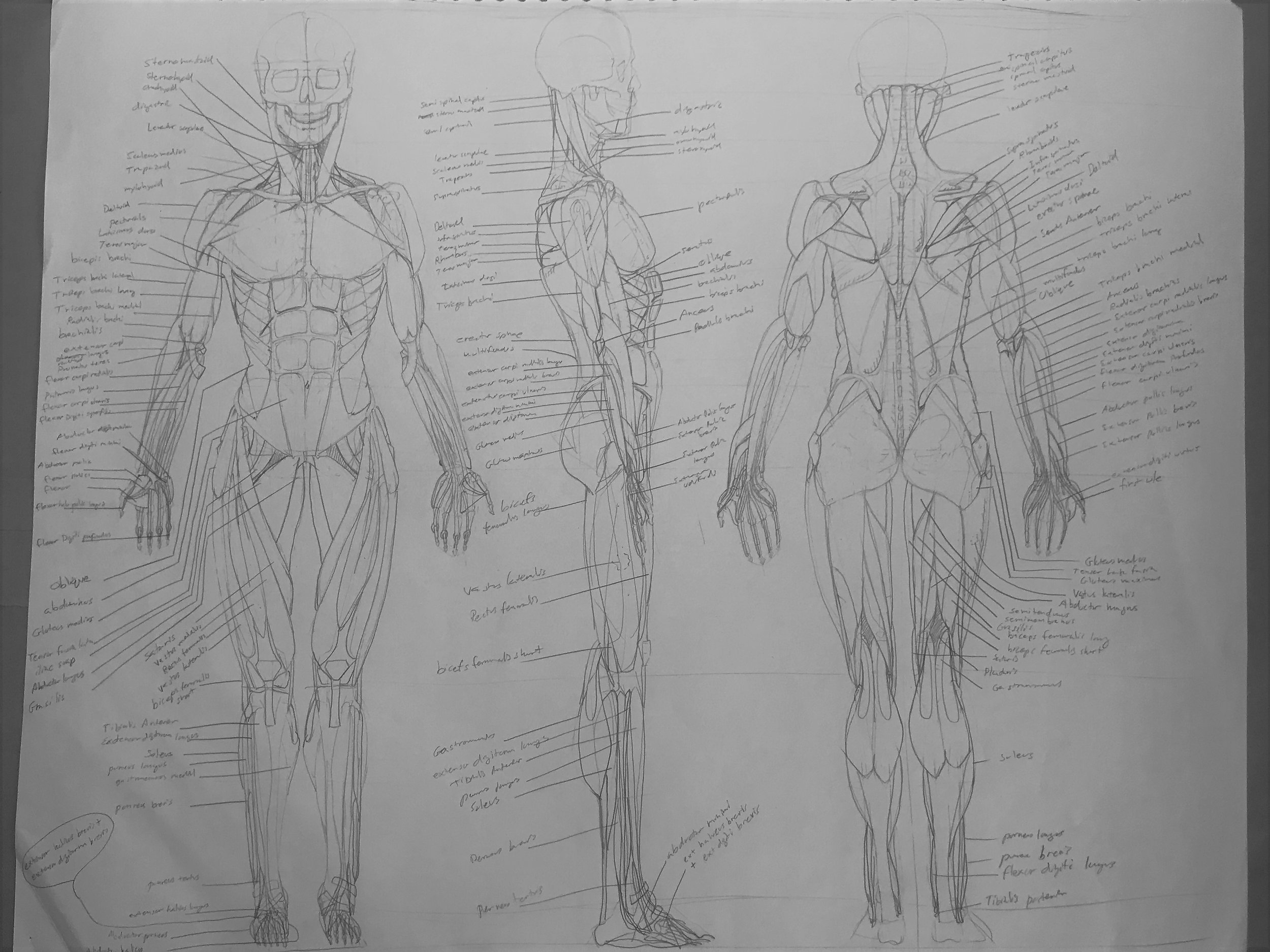 anatomy for website.jpg