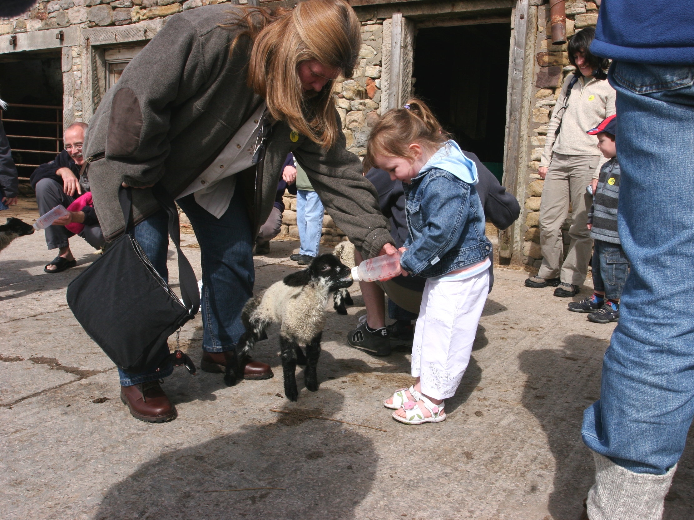 FEED THE ANIMALS - Feed sheep, goats and chickens at 11:30, 14:00 and 16:00 every day.