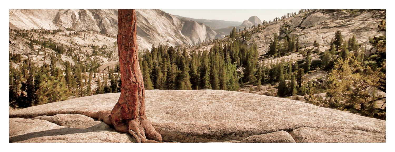 20080807-©_Horst_Hamann-1250138_Yosemite_CA_Snapseed.jpg