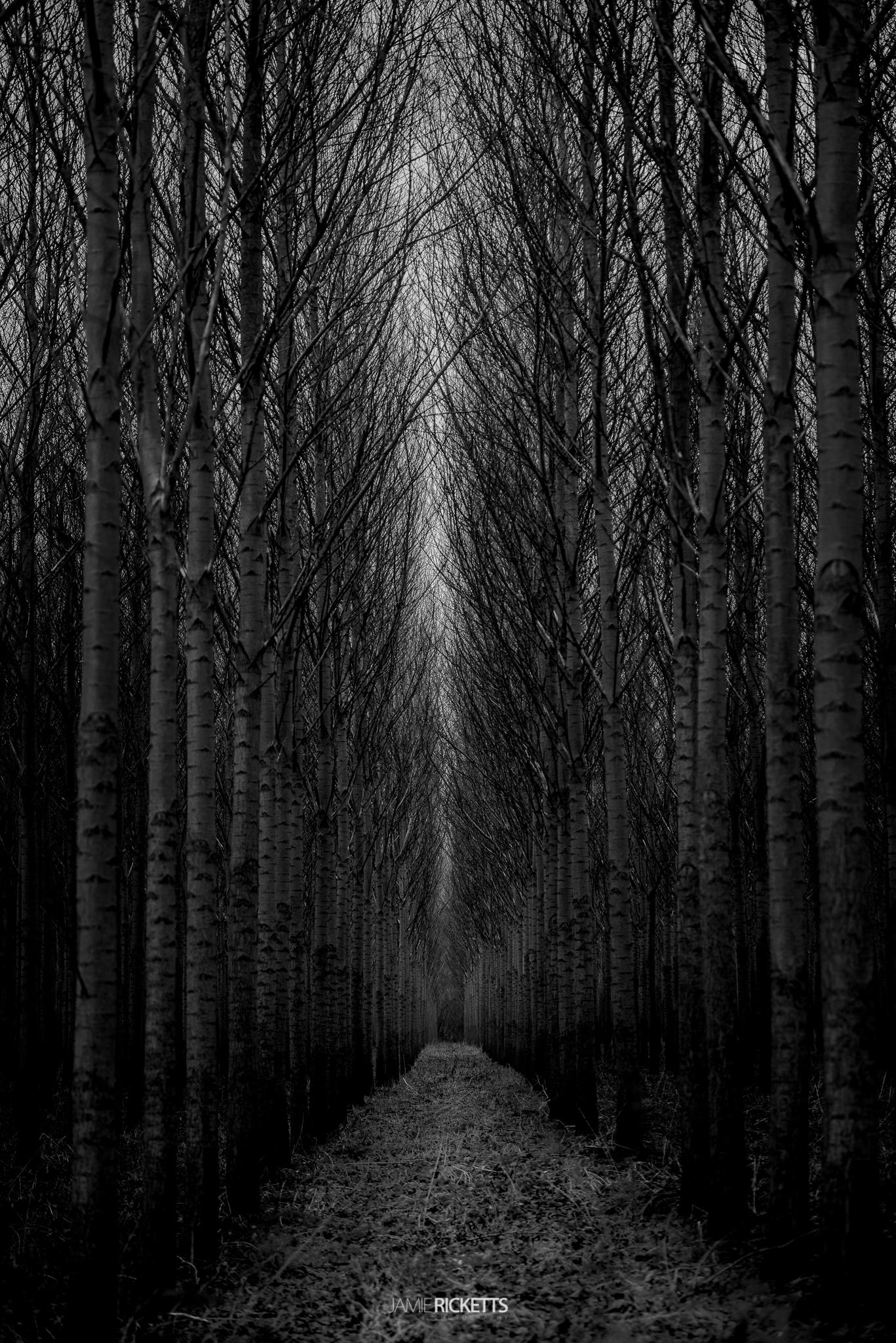 Row of Trees near Crudgington, Telford