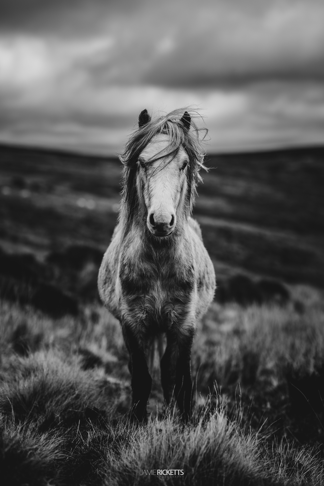 Wild Horse on the Long Mynd.