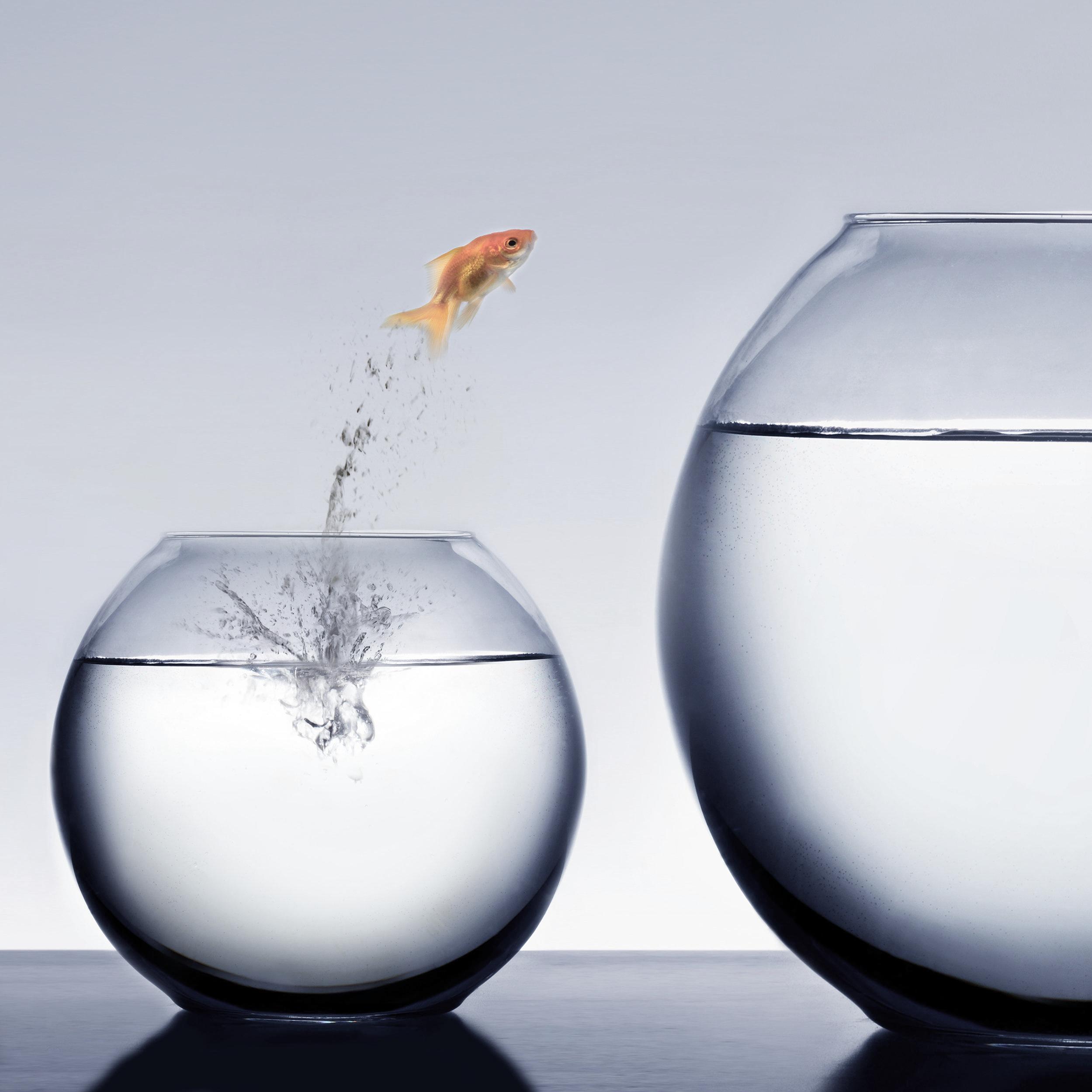 Chancen und Risiken 2019 - Ihre Destiny Analyse für 2019 hilft Ihnen Chancen und Möglichkeiten zu entdecken, um das Jahr und Ihre Ziele besser zu planen oder zu sehen, wie sich das Jahr entwickelt hat oder Sie noch korrigieren sollten.Es ist ein guter Weg mit dem System vertraut zu werden - und den grössten Nutzen daraus zu ziehen.1 – 1 ½ Stunden Beratung zu Ihren Chancen und Möglichkeiten 2019Empfehlungen für Zielsetzungen und Chancen, die es zu nutzen giltSensibilisierung für mögliche RisikenSchriftliche Zusammenfassung der AnalysePersönlicher Kalender bis Ende 2019 mit zusätzlichen InformationenKosten: 199.00 CHF incl. MWST
